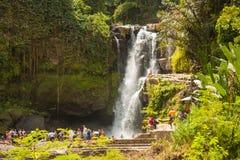 在巴厘岛,印度尼西亚的密林瀑布 库存照片