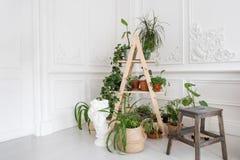 在巴洛克式的样式的豪华轻的内部 有DIY木立场的一个宽敞的房间花的 在的植物灰泥 免版税库存照片
