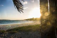 在巴西海滩的日落 免版税库存照片