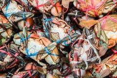 在市场上的巨型泥螃蟹 免版税库存照片