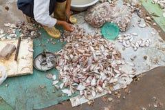 在市场上的新鲜抓住鱼 库存照片