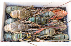 在市场上的新鲜的龙虾 免版税库存图片