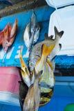 在市场上的热带海水鱼 免版税库存照片