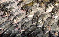 在市场上的鲜鱼在索非亚,保加利亚, 2月, 15日2017年 免版税库存照片