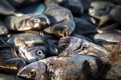 在市场上的死的鱼 免版税库存图片