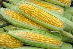 在市场摊位的玉米棒子 库存照片