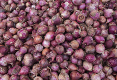 在市场显示的红洋葱堆 新鲜的红洋葱待售 秋天收获在庭院里 图库摄影