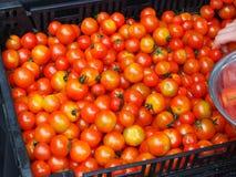 在市场条板箱的西红柿 免版税库存照片