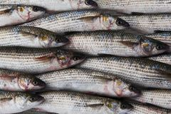 新鲜的灰鲻鱼鱼在市场上 图库摄影