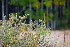 在布什的鸟 图库摄影