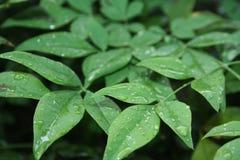 在布什阵雨下的绿色 免版税库存照片
