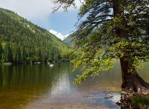 在布埃纳文图拉科罗拉多附近的Cottonwood湖 免版税库存图片