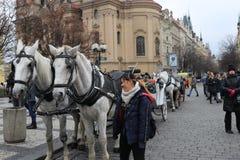 在布拉格街道上的马  库存照片