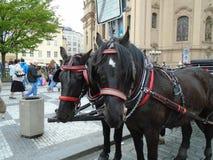 在布拉格` s老镇中心的附属的马 库存照片