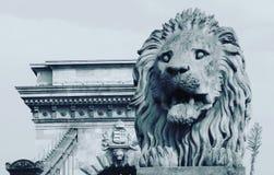 在布达佩斯铁锁式桥梁前面的一头狮子 库存照片