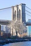 在布鲁克林大桥前面的干燥树在纽约 免版税库存图片