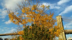 在布鲁克林大桥前面的经典秋天场面- NYC -纽约 免版税库存图片
