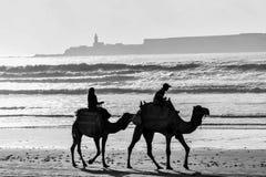 在布鲁姆` s著名缆绳海滩,布鲁姆,西澳州的骆驼骑马 库存照片