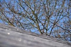 在布什前核桃是受霜害屋顶 免版税库存图片