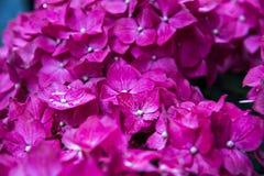 在布什的桃红色花 库存图片