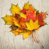 在帆布放置的五颜六色的秋天槭树叶子 图库摄影