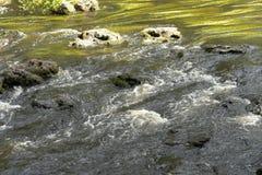 在希尔斯伯勒角河的一阵急流 库存图片