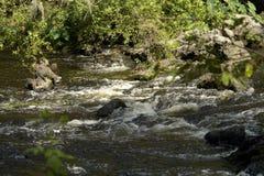 在希尔斯伯勒角河的一阵急流 库存照片
