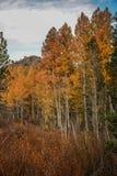 在希望谷的五颜六色的白杨木 免版税库存照片