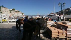在希腊海岛的驴,九头蛇 他们是在海岛上的唯一的交通工具 影视素材