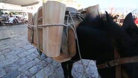在希腊海岛的驴,九头蛇 影视素材