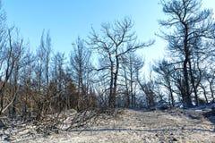 在希腊的被烧的森林地舒展 库存图片