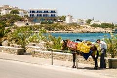 驴在希腊 库存照片