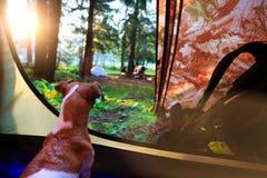 在帐篷里面的狗 免版税库存照片