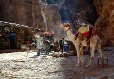 在帐篷附近的骆驼用在Petra的可口可乐 库存图片
