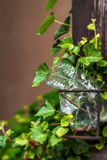 在常春藤叶子的塑料瓶  免版税库存图片