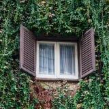 在常春藤墙壁上的一个窗口 免版税库存图片