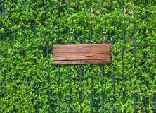 在常春藤墙壁上的空的木横幅 图库摄影