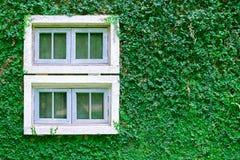 在常春藤墙壁上的窗口 免版税库存图片