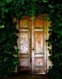 在常春藤庭院掩藏的老木门  免版税库存照片