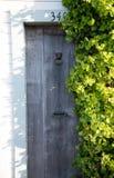 在常春藤掩藏的门道入口 图库摄影