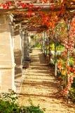 在常春藤盖的传统壁角房子 图库摄影