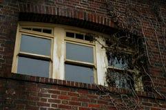 在常春藤藤盖的窗口 免版税库存照片