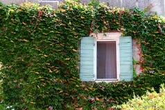 在常春藤覆盖的墙壁上的窗口 免版税库存图片