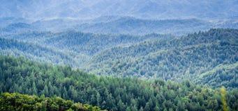 在常青树和峡谷的盖的全景小山在一有雾的天,圣克鲁斯山,旧金山湾区, 库存照片