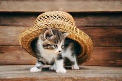 在帽子下的求知欲小猫 库存照片
