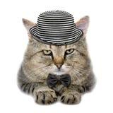 在帽子和蝴蝶领带的猫 图库摄影