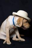 在帽子的小狗 免版税库存照片