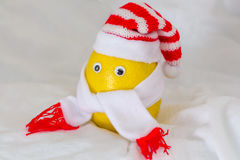 在帽子的柠檬栓与围巾 库存图片
