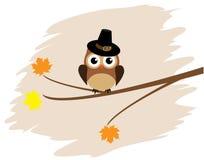 在帽子的猫头鹰 免版税库存照片