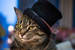 在帽子的猫 免版税库存照片